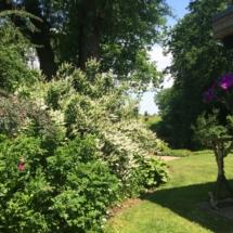 Zicht op tuin Boomklever