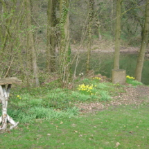 Kateeker achtertuin in voorjaar