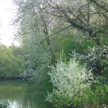 Zicht op achtertuin en viswater in voorjaar